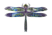 Dragonfly Refraxion Wall Art